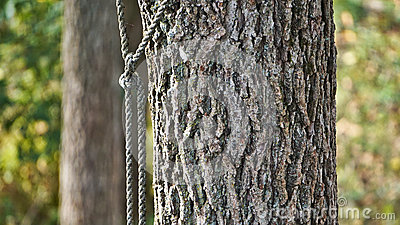 roped-tree-rope-knot-85990552